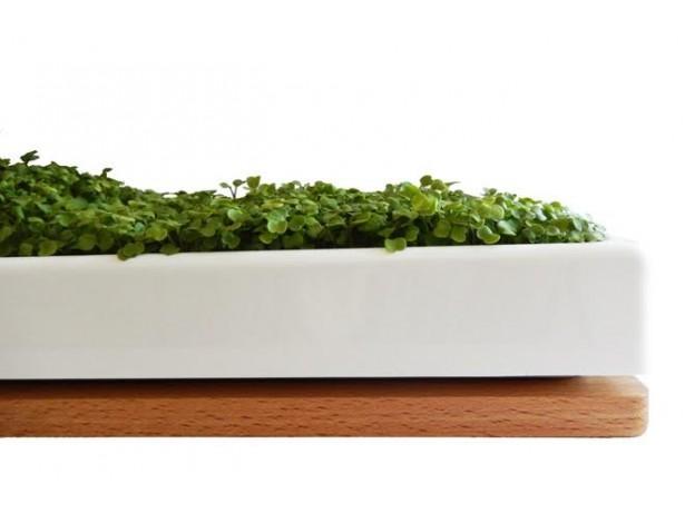 Mikro Zelenjava – lesen podstavek (hrast)