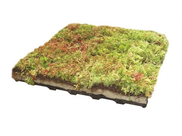 Green Roof-50 x 50 cm