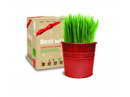Grow Kit Merry Christmas